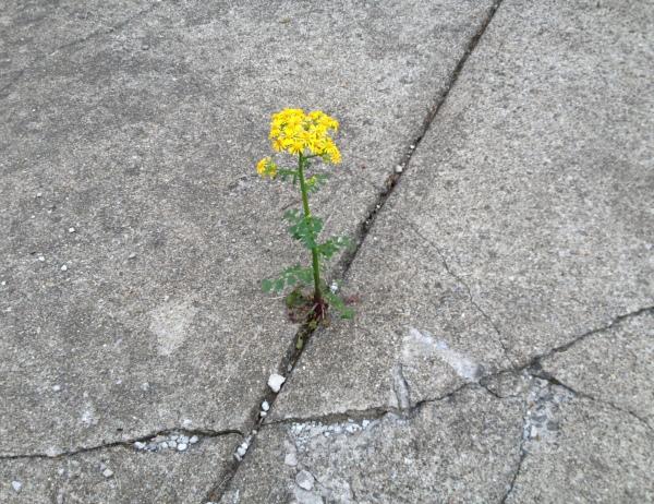 alley flower